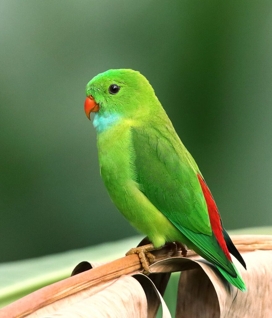 photo of perched parakeet